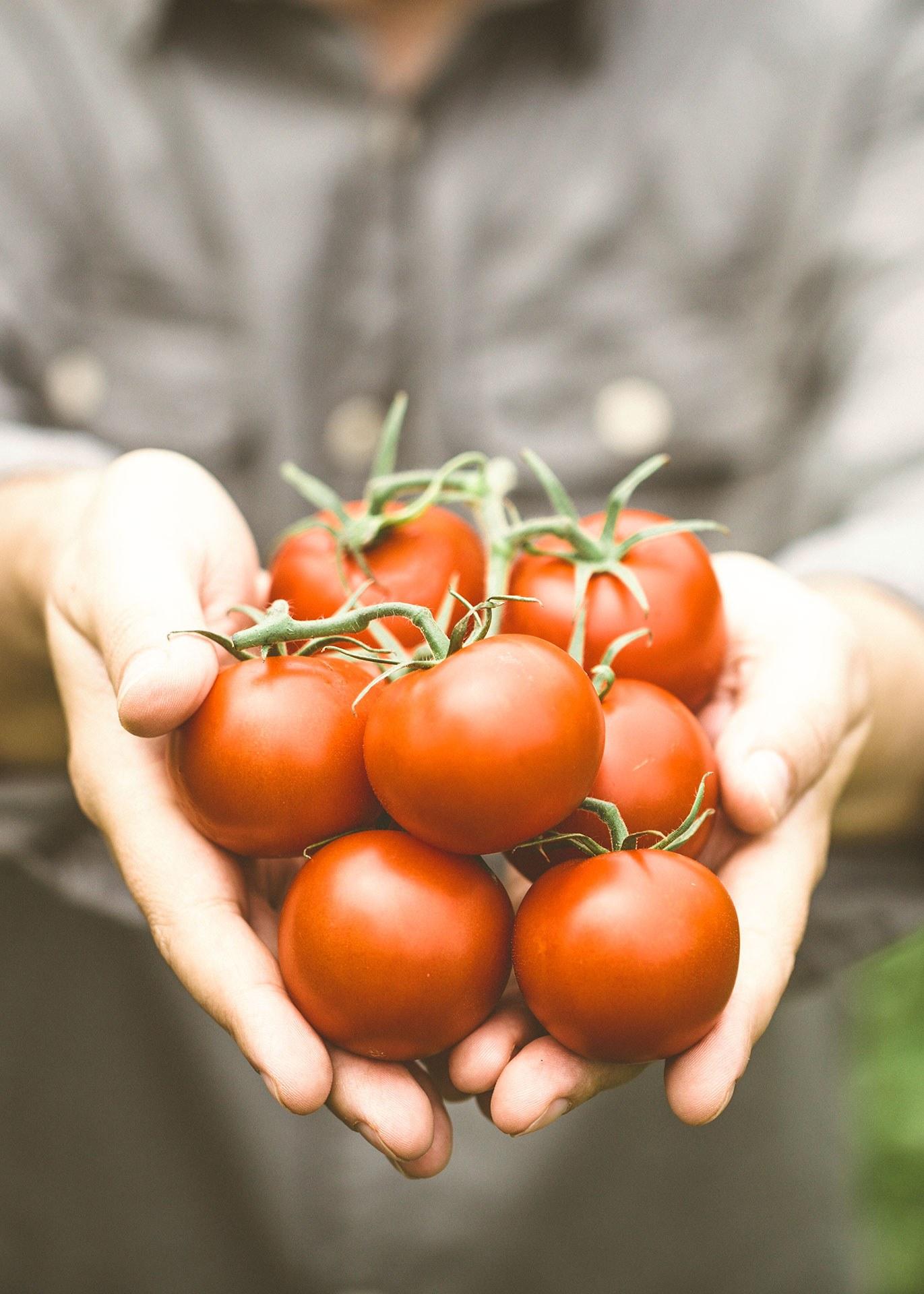 Tomates mains WR